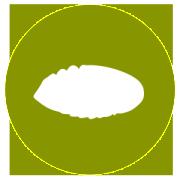 Gelsicoltura